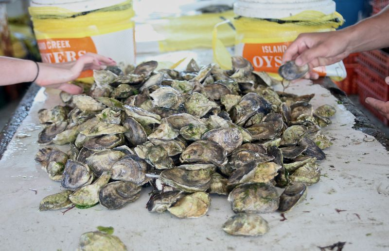 OysterSorting