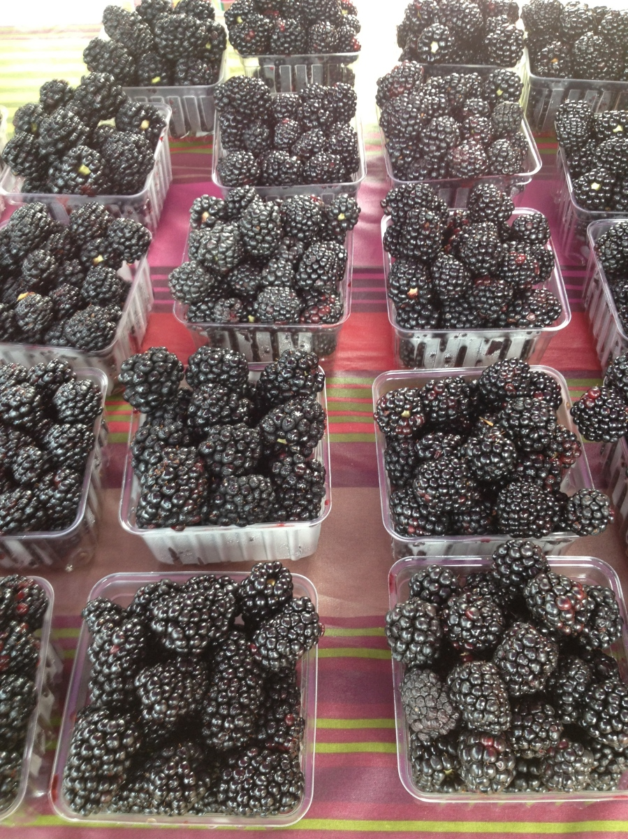 I wanted to bring these blackberries from Agriberry back to Boston with me.