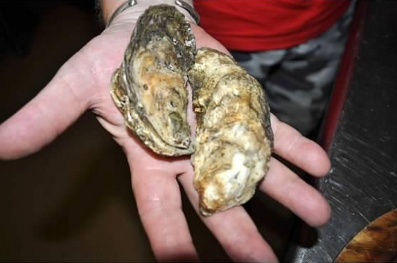 Pepper Creek Oysters